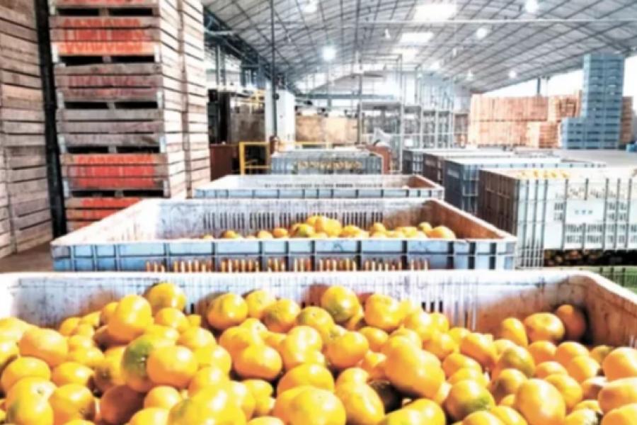 Preocupación de exportadores de citrus ante un pedido de aumento salarial superior al 100%