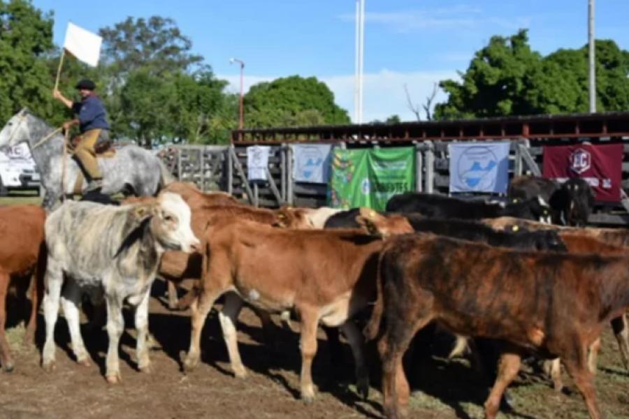 Pequeños productores en Caá Catí