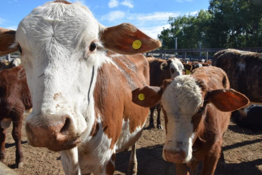 Corrientes rechaza el cierre de las exportaciones y ratifica el acompañamiento al sector ganadero