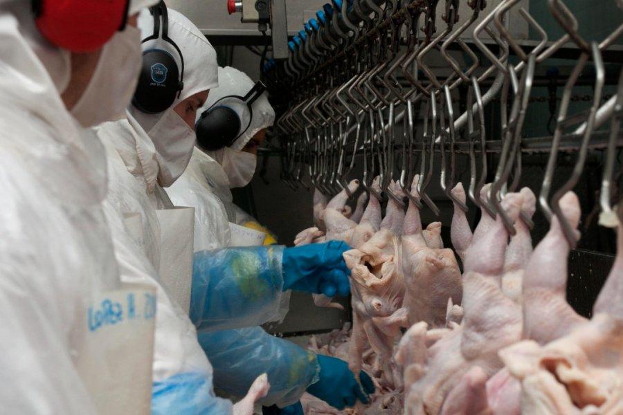 Argentina reiniciará la exportación de carne a la Unión Europea, tras ajustes sanitarios