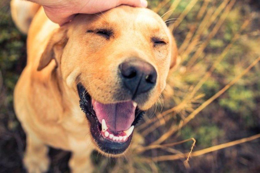 Por qué cada 2 de junio es el Día Nacional del Perro