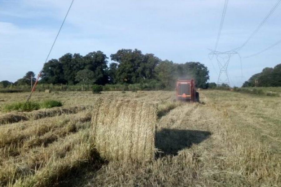 Ganadería: Entregarán forraje a pequeños productores