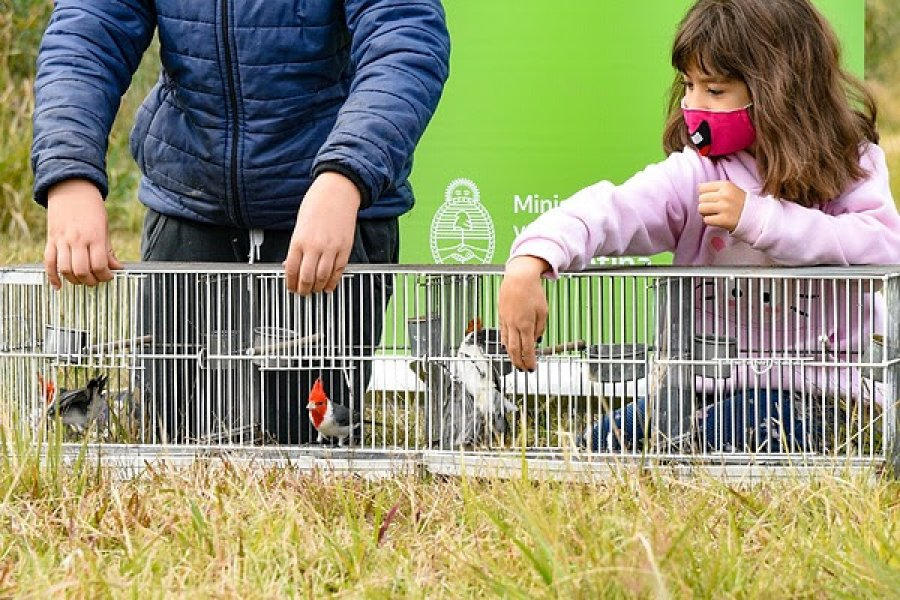 Liberaron cerca de un centenar de aves rescatadas
