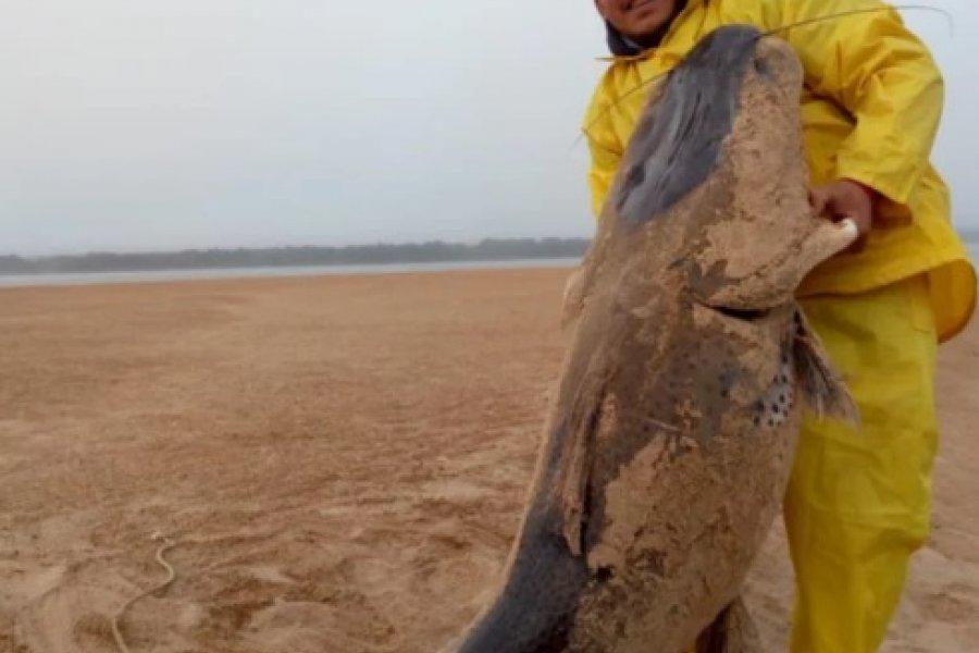 Enérgico rechazo a la captura de un enorme surubí en Corrientes