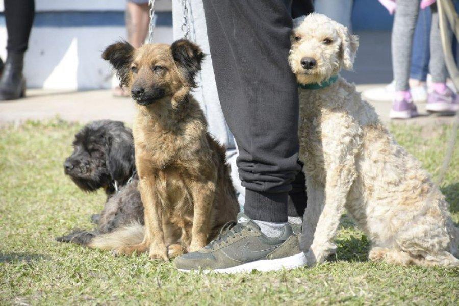 Atenciones veterinarias gratuitas a los barrios Juan de Vera, Laguna Seca y 17 de Agosto