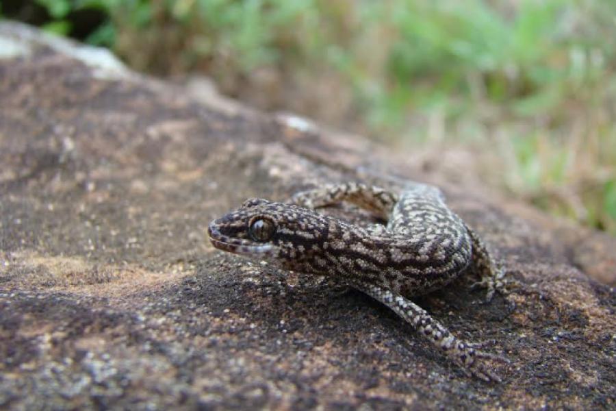 Financiarán mejora y crecimiento de la Colección Herpetológica de la UNNE