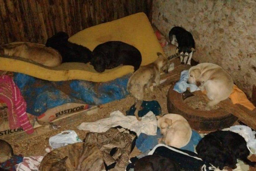Murieron unas 20 mascotas en el incendio de un refugio