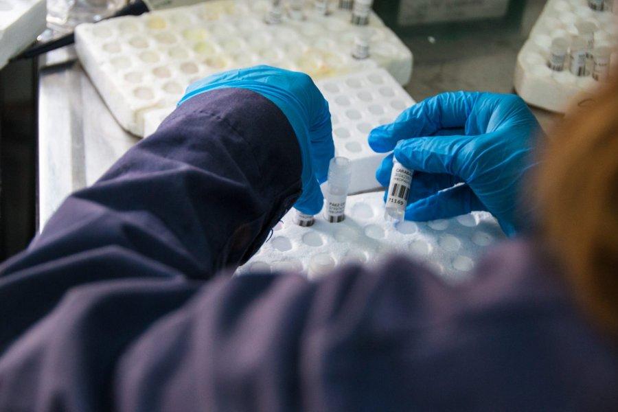 Corrientes detectó 295 casos nuevos de Coronavirus