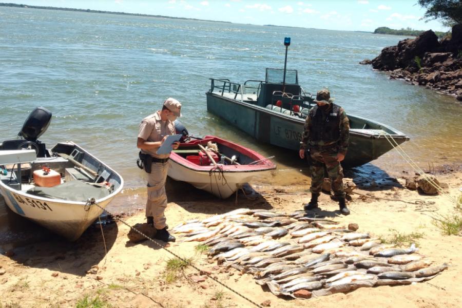 Pesca ilegal en el río Paraná: Secuestran casi 100 bogas, cañas y un mallón