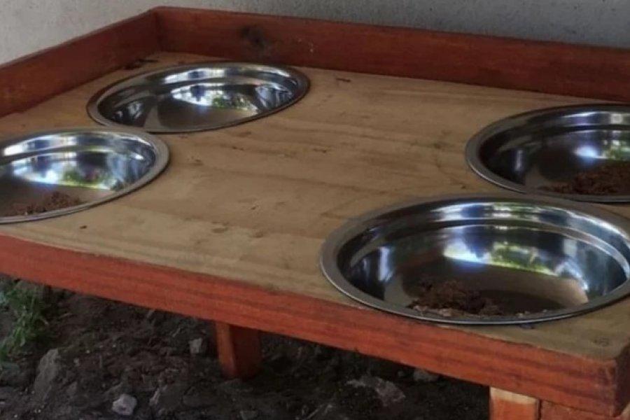 Después de tres días de colocarlos, se robaron uno de los comederos para gatos callejeros