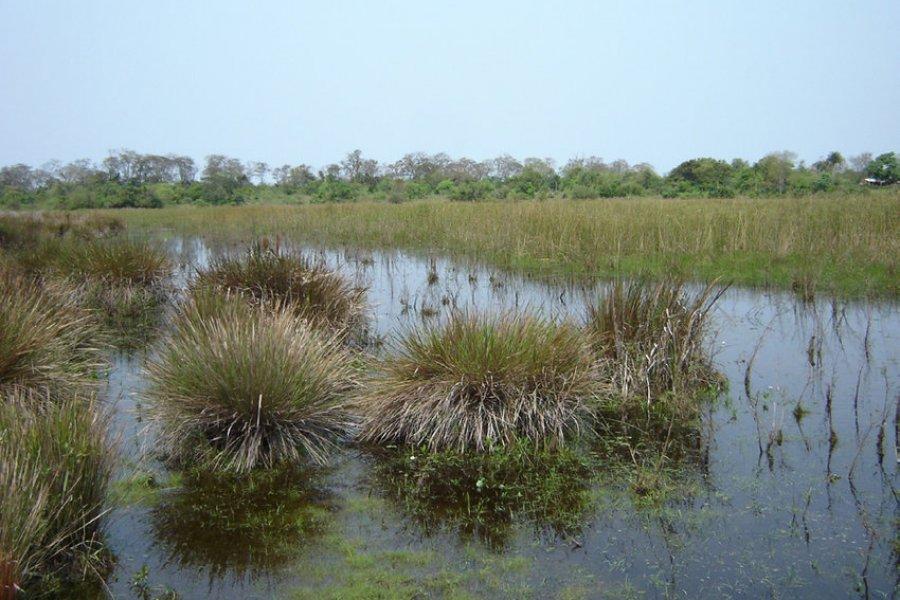 La Legislatura reconoció oficialmente a la Reserva natural Apipé como Parque provincial