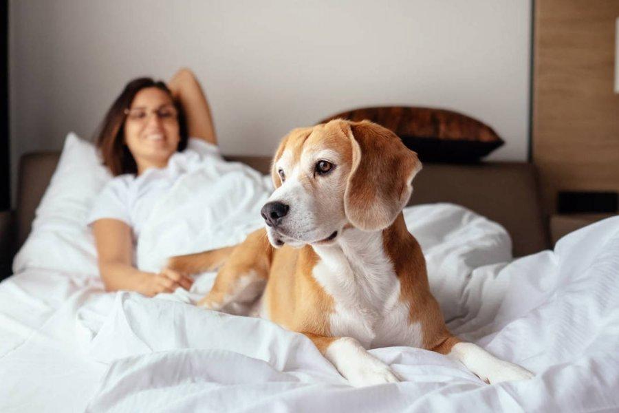 Aconsejan no compartir la cama con los perros por presencia de una bacteria muy peligrosa