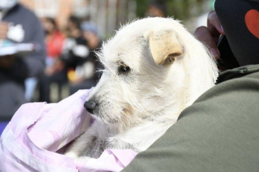 Atenciones veterinarias gratuitas a los barrios Samela, Colombia Granaderos y Santa Margarita