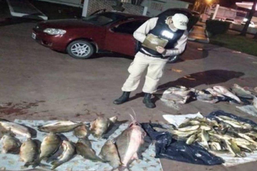 Trasladaba en un auto más de 400 kilos de pescados
