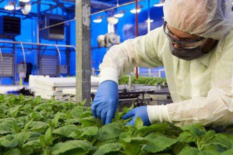 """Un correntino se ofreció como voluntario para la """"vacuna vegetal"""" contra el Covid-19"""