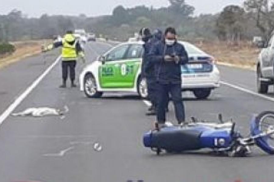 Motociclista herido al chocar contra un perro en Ruta 12