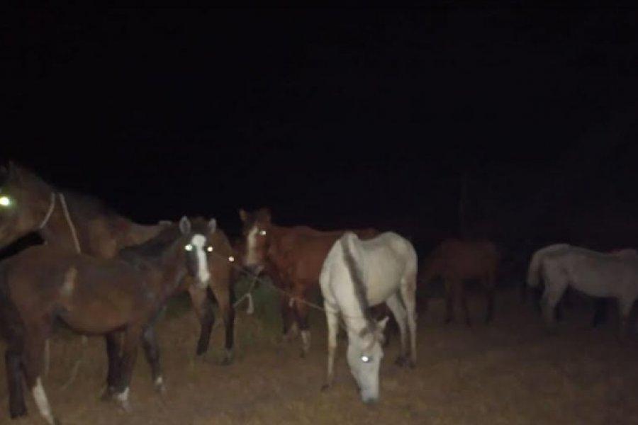 La Policía evitó la sustracción de once caballos del predio de Mapac