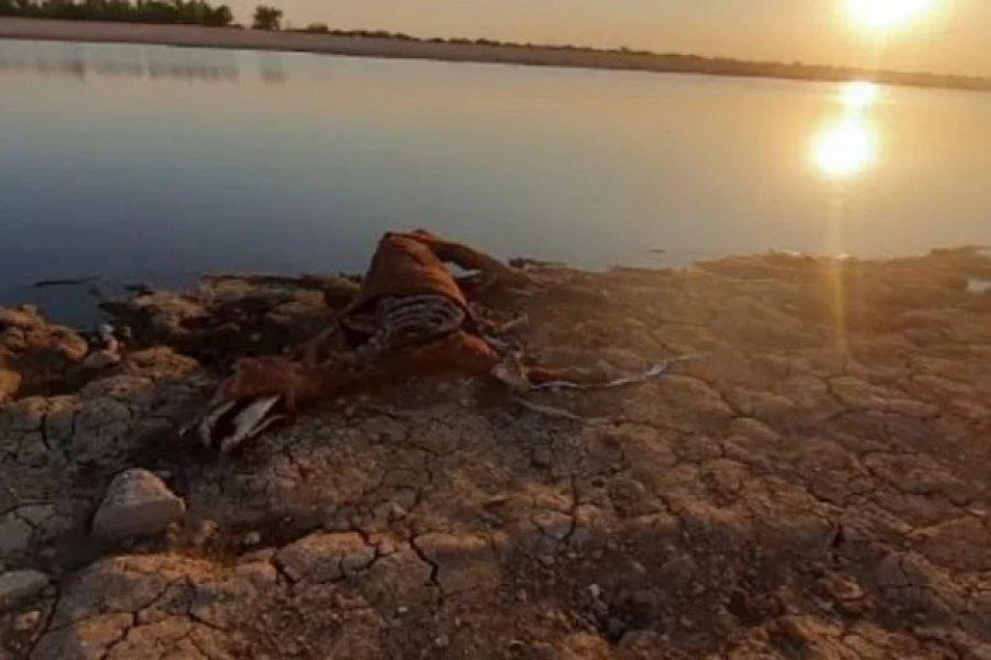 Corrientes: Denuncian mortandad de caballos en la costa del río Paraná
