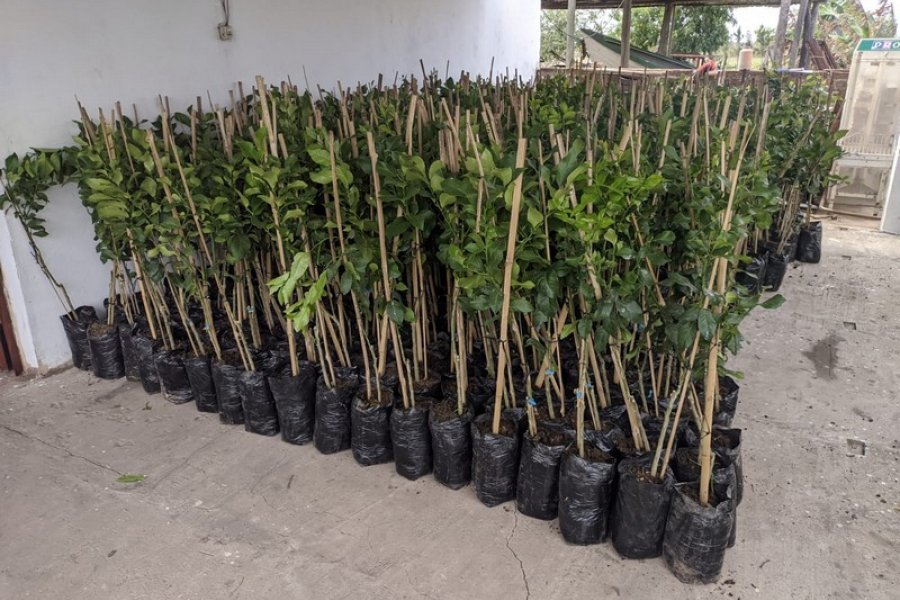 Plan Limón: continúa la distribución de plantas para esta nueva etapa en primavera