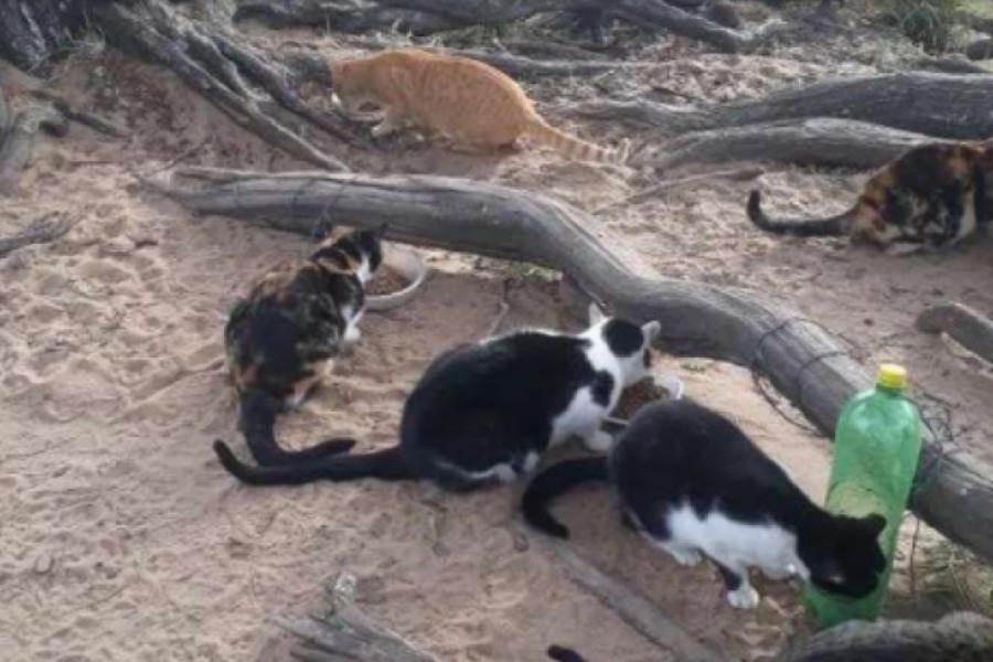 Denuncian desaparición de 15 gatos tras obras en la Costanera de Corrientes