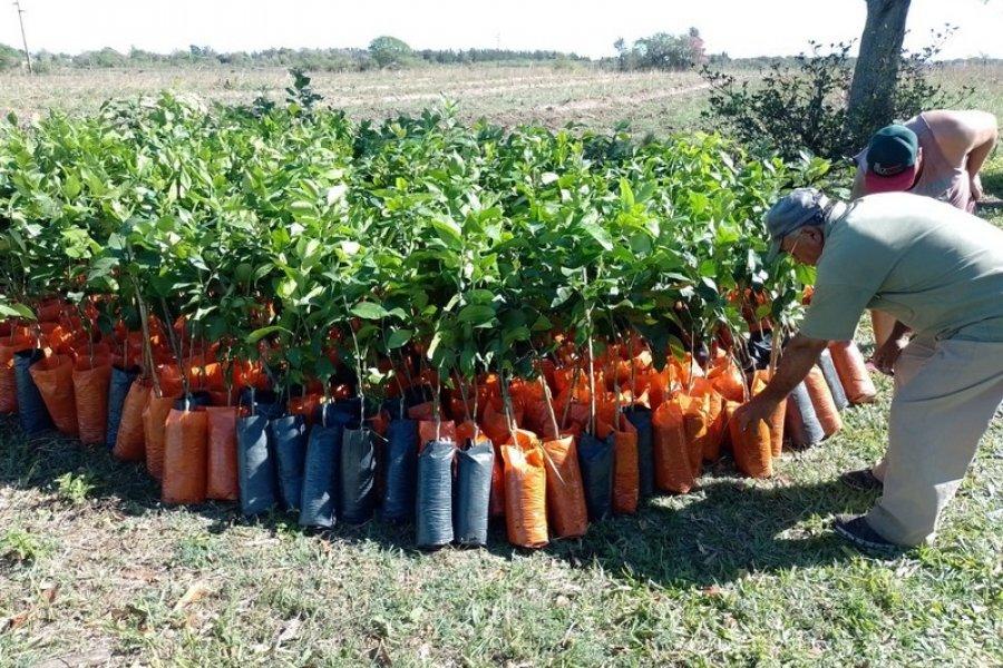 Plan Limón: Nueva descarga de plantas en El Sombrero para sumar 9 hectáreas más al programa