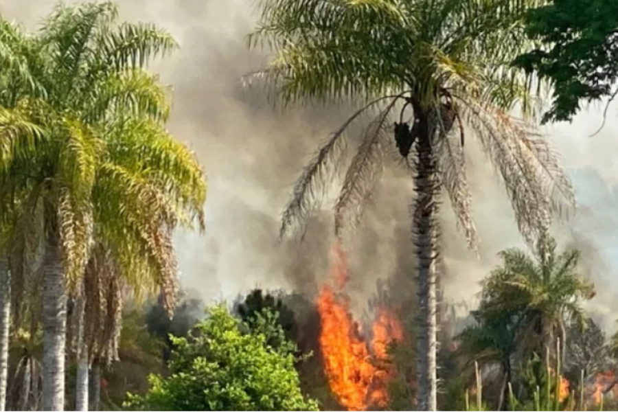 El fuego amenazó un barrio privado sobre ruta 43