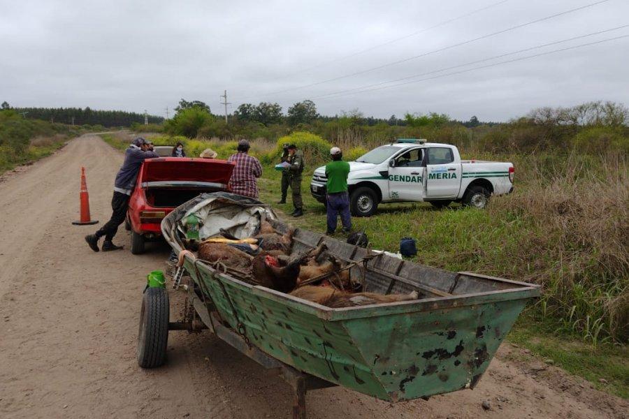 Entre Ríos: Trasladaban ilegalmente nueve animales autóctonos faenados