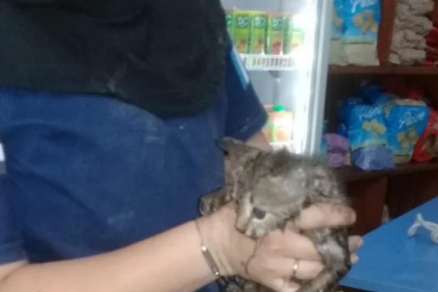 Rescataron a un gato atrapado en un tubo