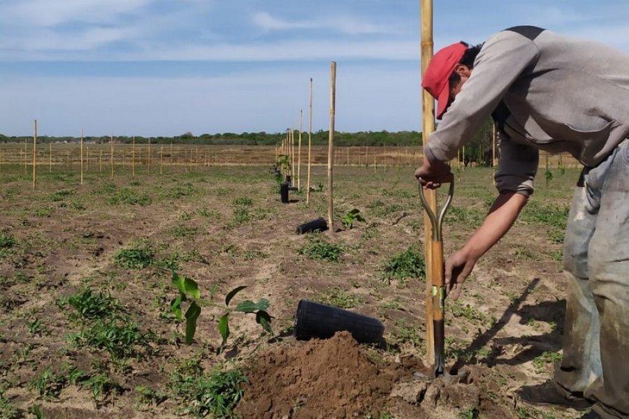 Con la descarga de 700 plantines, instalaron la primera quinta en Santa Ana
