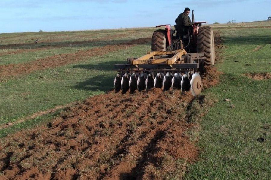 Plan Palta: comenzó la preparación de suelo para las primeras hectáreas de plantación