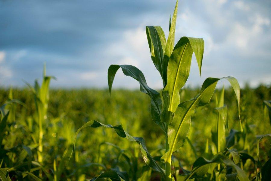 Se vienen más tormentas al área agrícola y podrían dejar acumulados de 30 a 50 milímetros