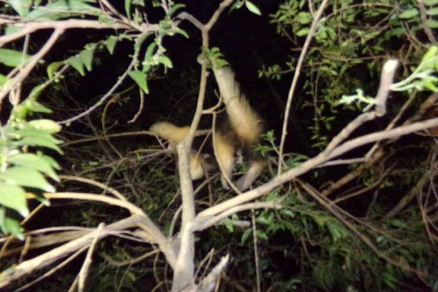 Itatí: Apareció un oso melero en el patio de una vivienda