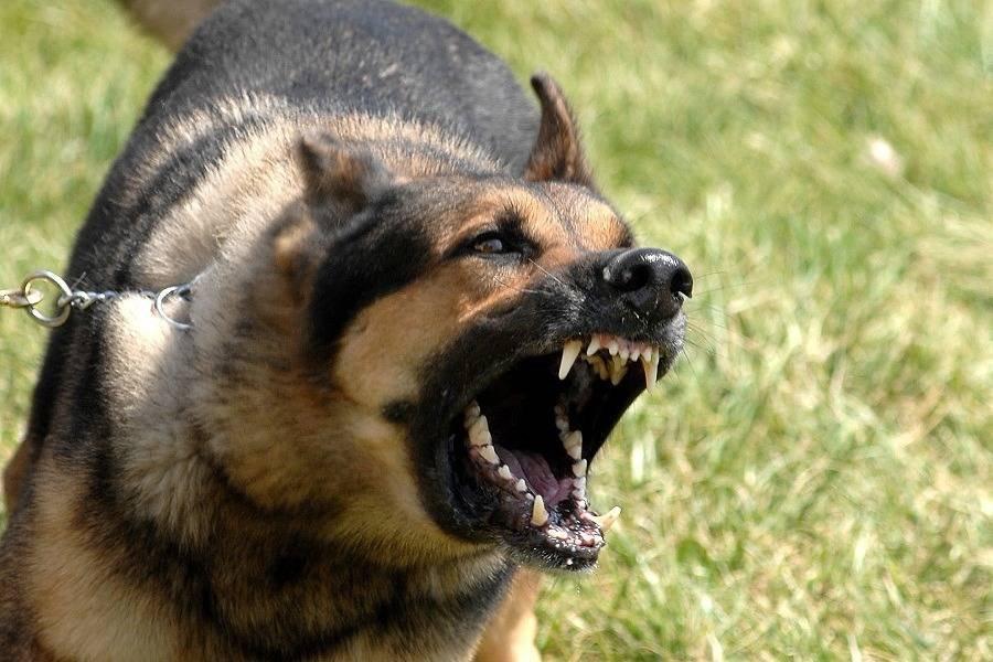 Goya: Piden detención de un hombre cuyo perro mordió a una persona