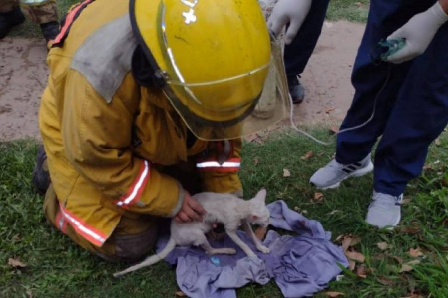Felino fue rescatado en un incendio