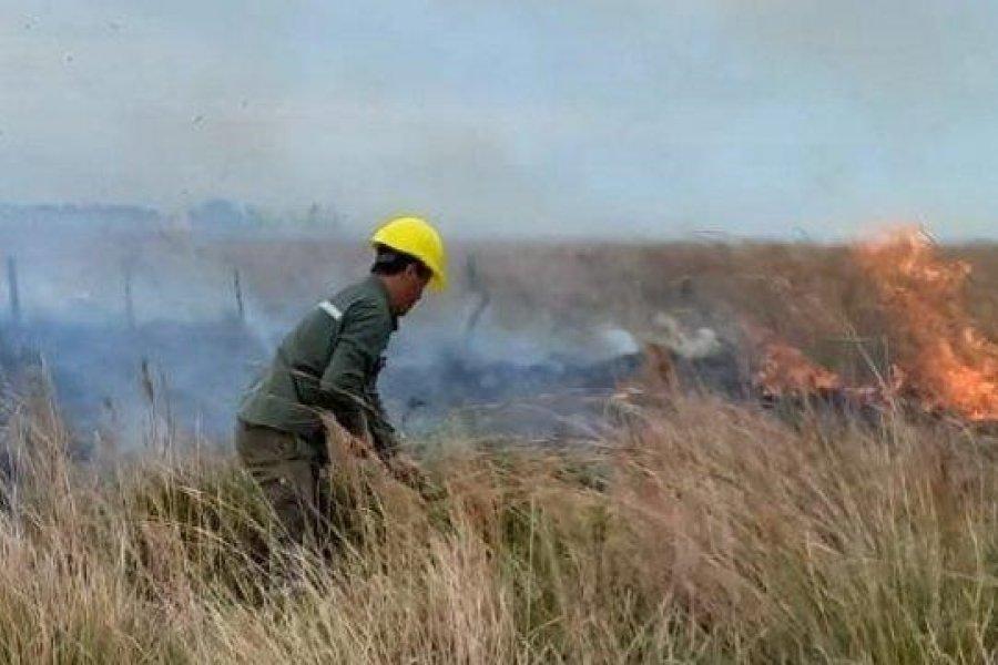 El fuego consumió un campo y puso en riesgo el tendido eléctrico