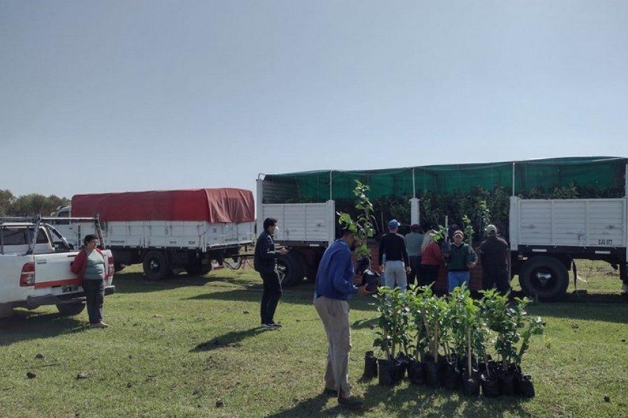 El Plan Limón echa raíces en Mburucuyá con 4.186 plantas