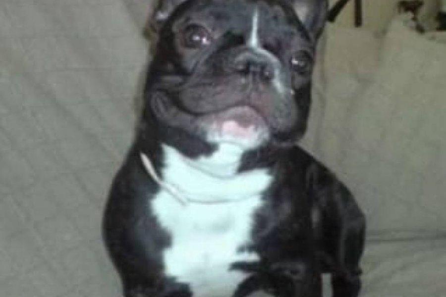 Insólito: Ingresó a una casa para robar un perro y terminó preso