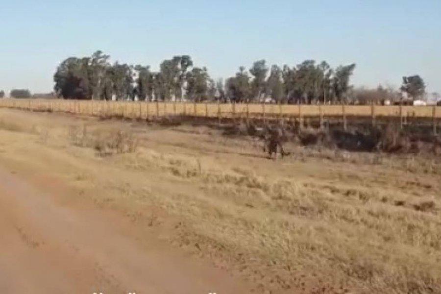 Filmaron a un puma suelto en en interior de Corrientes