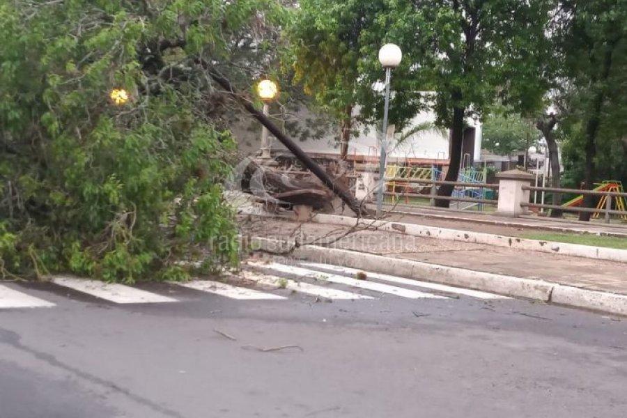 El temporal provocó caída de árboles en la Ciudad