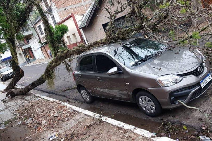 Un árbol cayó sobre un auto en el barrio Cambá Cuá