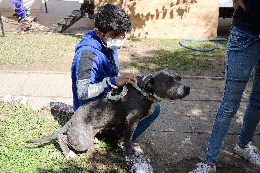 Mascotas Saludables lleva 78 operativos y cerca de 20 mil atenciones veterinarias