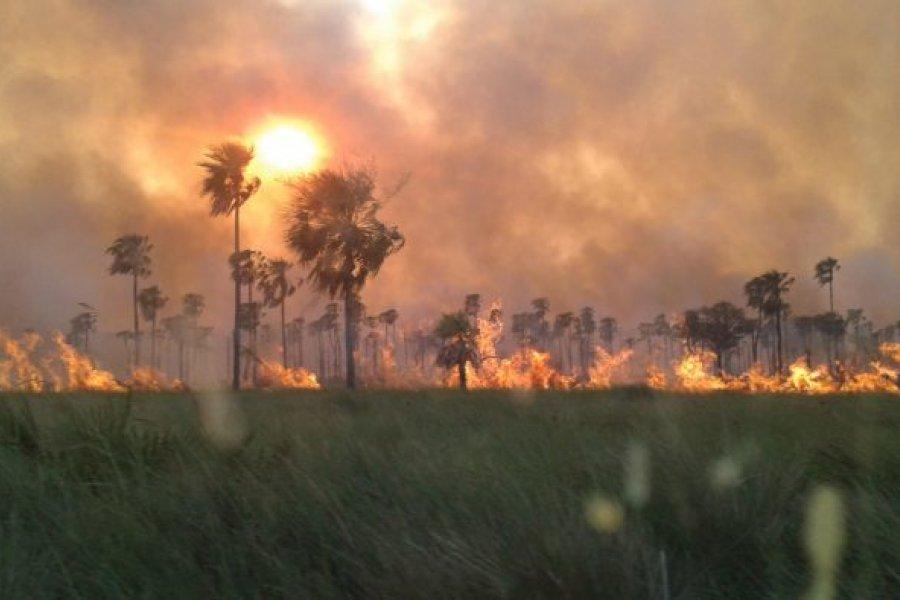 Un incendio doloso de pastizales en el Iberá seguirá investigado por la justicia