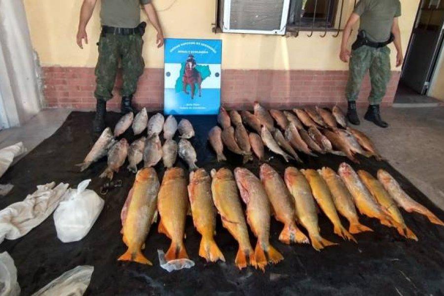Depredación: Incautaron gran cantidad de pescados en Bella Vista